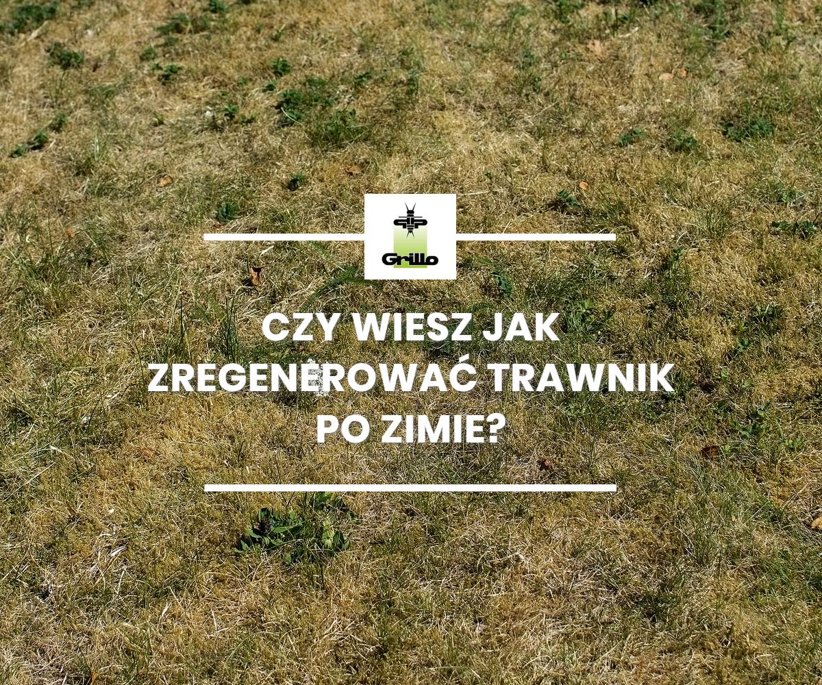 jak zregenerować trawnik po zimie